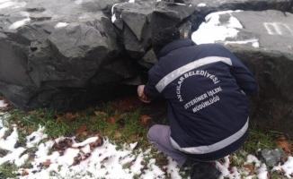 Avcılar Belediyesi Kış Aylarında Mama Desteğini Arttırdı