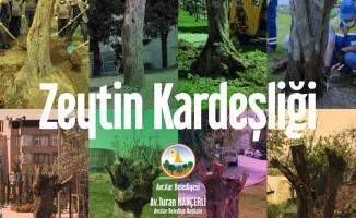 Hançerli'nin, Tünel İnşaatından Kurtardığı Zeytin Ağaçları 8 İlçede Hayat Buldu