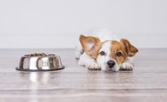 Köpek Maması Alırken Nelere Dikkat Edilmeli?