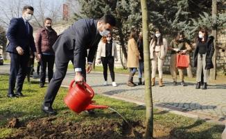 Kağıthane Belediyesi Manavgat'a 10 Bin Fidanla Nefes Oluyor