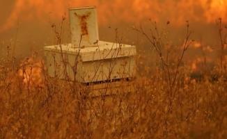 Ormanlarımızın Yeniden Yeşermesi İçin  Arıların Geri Dönmesi Şart !