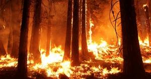 Son Bir Haftada Çıkan Orman Yangınları