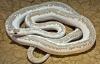 Zeytinburnu'nda bir evde itfaiye yılan aradı