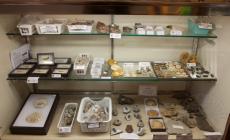Adnan Oktar'ın Arkadaşları Fosillerin Gerçek Değerleri Hakkında Ne Söyledi ?